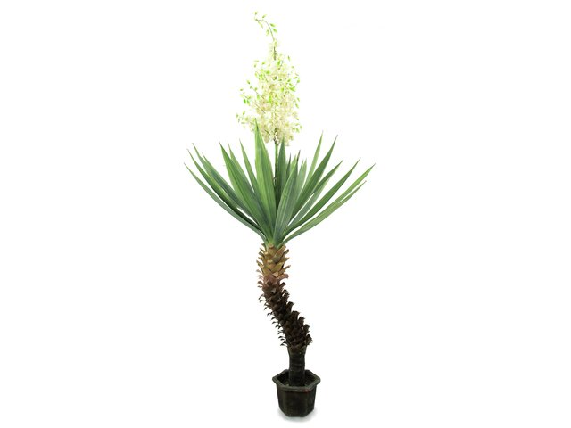mpn82511167-europalms-yucca-palm-with-blossoms-artificial-plant-222cm-MainBild