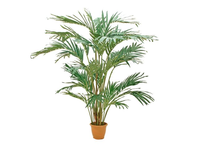 mpn82511311-europalms-canary-date-palm-artificial-plant-240cm-MainBild