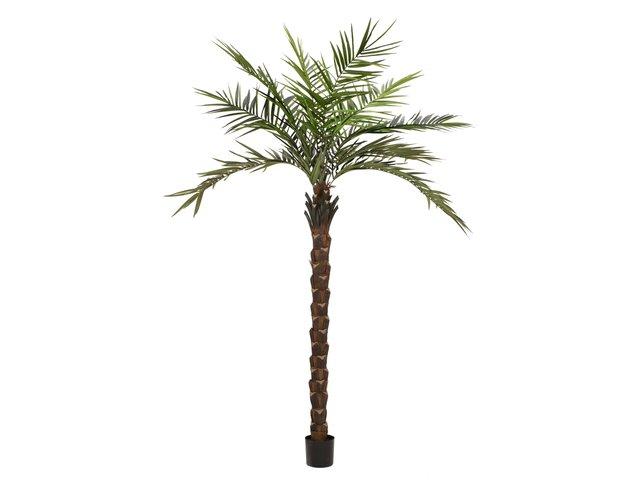 mpn82511370-europalms-kentia-palme-deluxe-kunstpflanze-300cm-MainBild