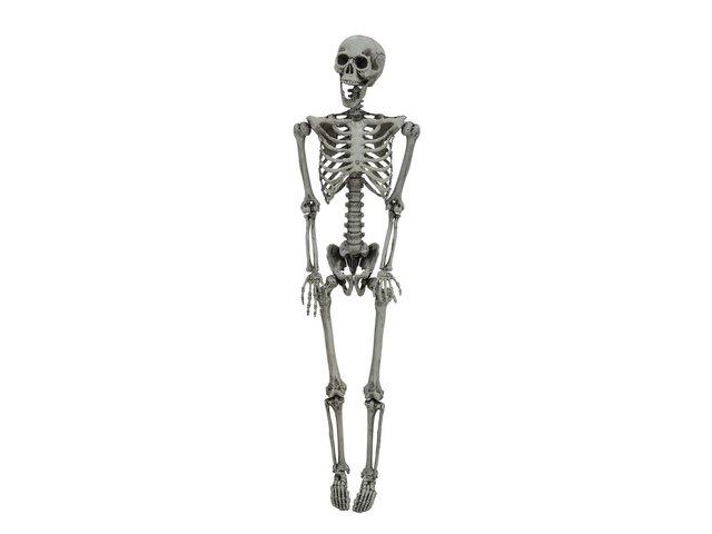 mpn83314426-europalms-halloween-skelett-gebleicht-160cm-MainBild