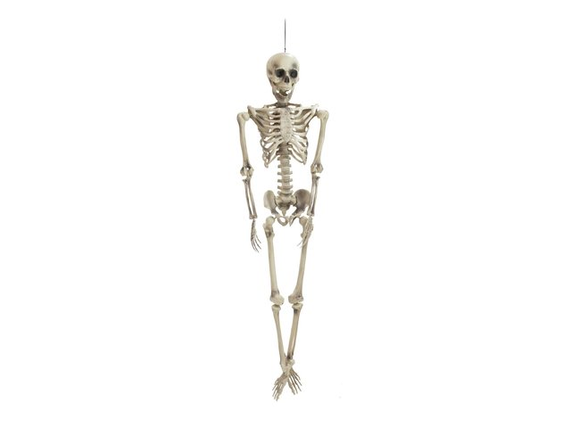 mpn83314594-europalms-halloween-skelett-MainBild