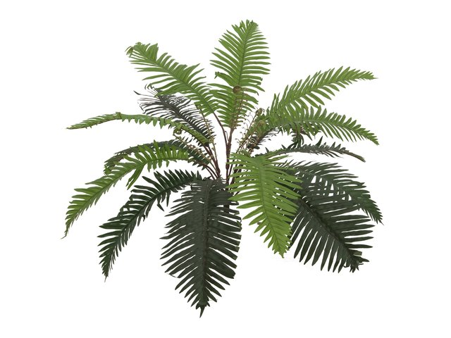 mpn82519422-europalms-sword-fern-artificial-plant70cm-MainBild