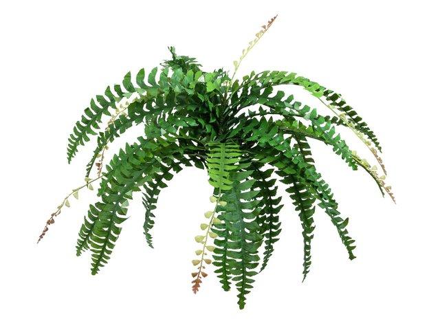 mpn82519940-europalms-boston-fern-with-flower-artificial-plant-green-85cm-MainBild
