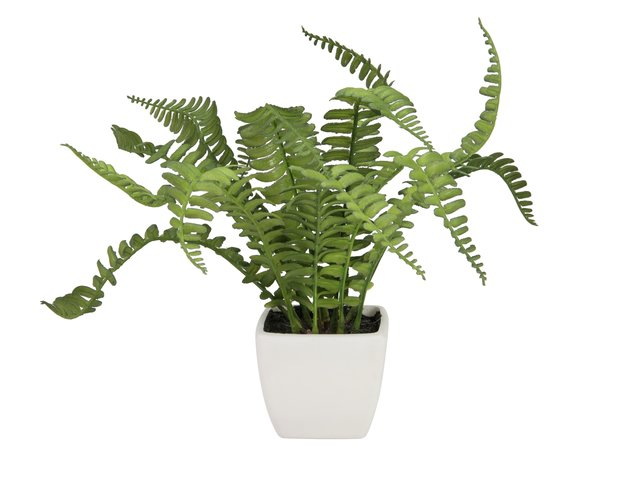 mpn82519946-europalms-boston-fern-in-pot-artificial-plant-25cm-MainBild