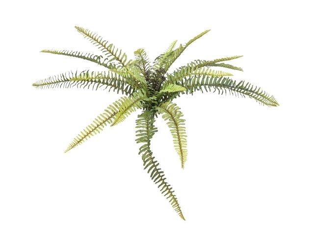 mpn82519949-europalms-forest-fern-artificial-plant-40cm-MainBild