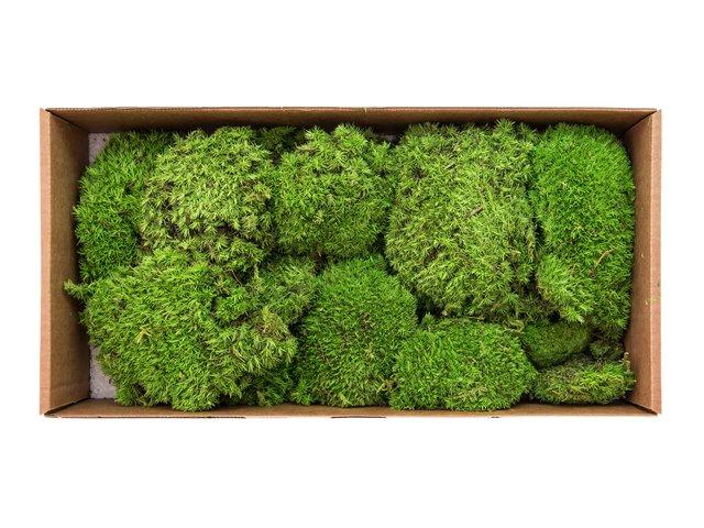 mpn8330909y-europalms-moss-stains-apple-green-prepared-10x-MainBild