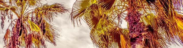 Palmpflanzen