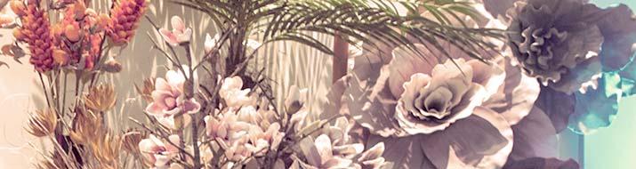Spezialpflanzen