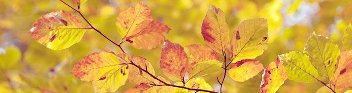 Foliage trees and ficus