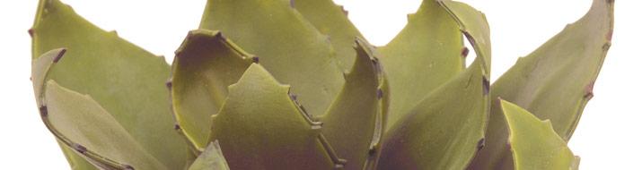 EVA-Pflanzen